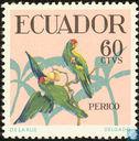 Scarlet-fronted Parakeet