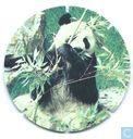 Reuze Panda