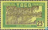 Cacao tree