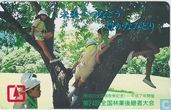 Girl Scouts of Japan, Junior Forest Rangers
