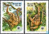 WWF - Southern spider monkey