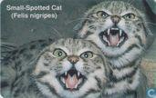 Small-Spotted Cat (Felis nigripes)