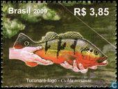 Brazilian Rivers - Peacock Bass