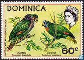 Imperial Amazon and Red-necked Amazon