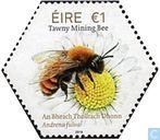irish native bees