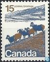 Bignhorn Sheep of Western Canada