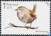 Garden birds - Wren