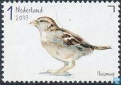 Garden birds - House sparrow