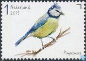 Garden birds - Blue tit