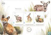 Dutch Mammals