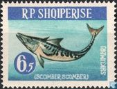 Postage Stamps - Albania [ALB] - Atlantic Mackerel