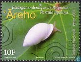 Endemic snail of Polynesia