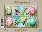 Vogels en hun eieren