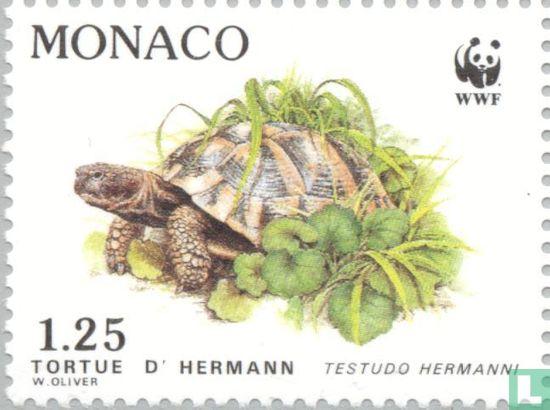 Monaco - WWF - Griekse landschildpad