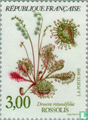France [FRA] - Plantes