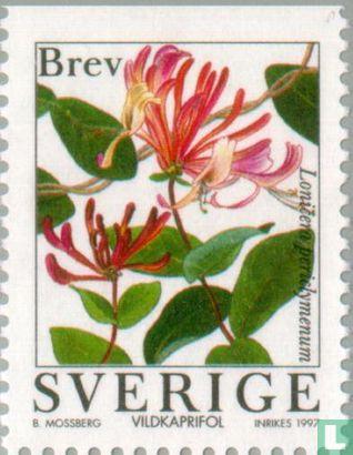 Sweden [SWE] - Flowers