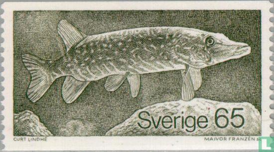 Sweden [SWE] - Northern pike