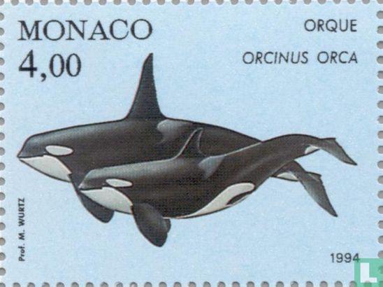Monaco - Whales