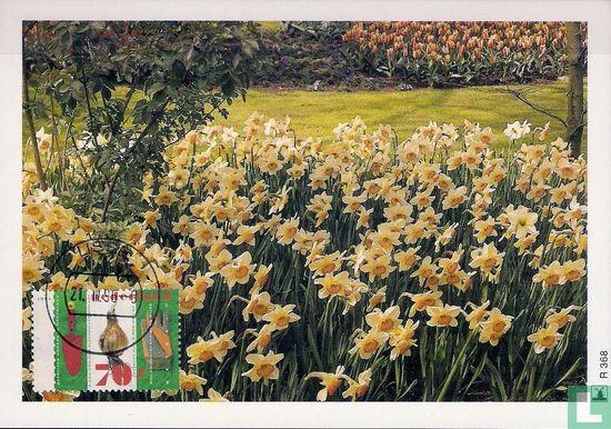 Netherlands [NLD] - Spring Flowers