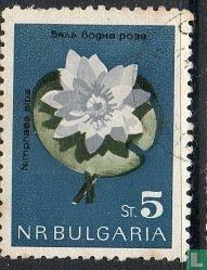 Bulgaria [BGR] - Flowers