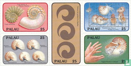 Palau - Nautilus belauensis