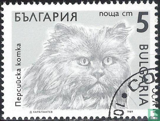 Bulgarien [BGR] - Cats