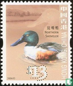 Hong Kong - Northern Shoveler