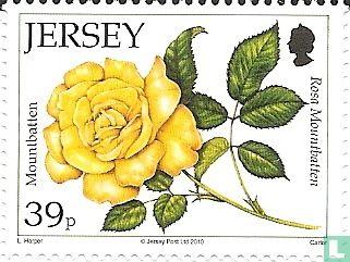 Jersey - Rozen
