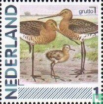 Netherlands [NLD] - Birds - Black-Tailed Godwit