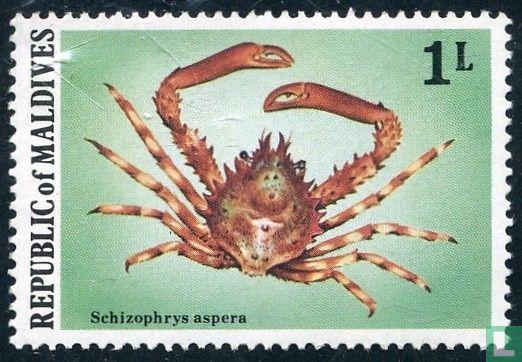 Maldives - Crustaceans