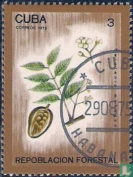 Cuba - Boisement national