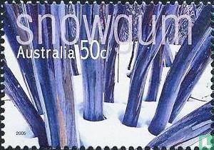 Australië [AUS] - Inheemse bomen (gegomd)