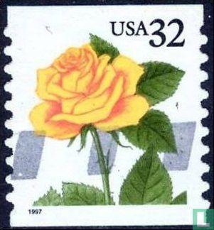 États-Unis d'Amérique (USA) - Fleurs