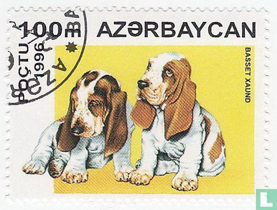 Azerbaijan - Puppies
