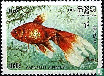 Cambodja - Carassius auratus