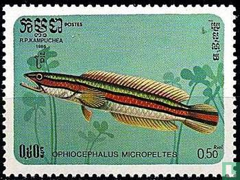Cambodja - Ophiocephalus micropeltes