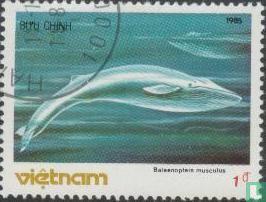 Vietnam - Zeezoogdieren