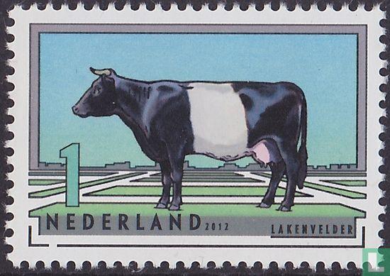 Pays-Bas [NLD] - Races bovines néerlandais