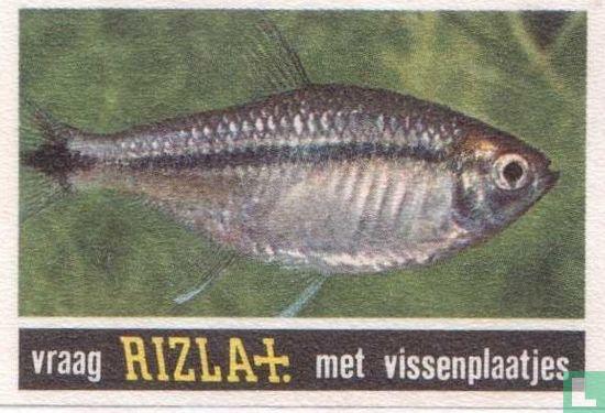 Vissen  - Image 1