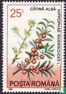 Roumanie [ROU] - Plantes médicinales
