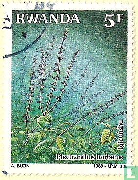 Rwanda - Geneeskundige planten