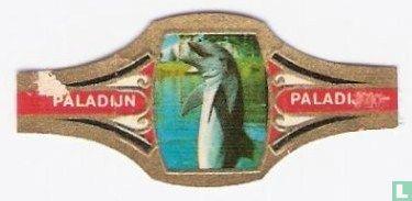 Paladijn - Flipper 1