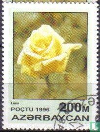 Azerbaijan - Roses