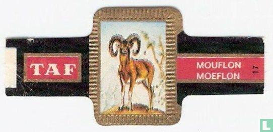 Taf - Moeflon