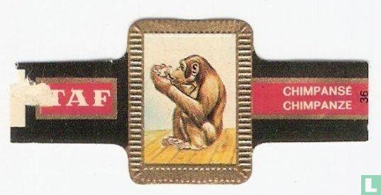 Taf - Chimpanze
