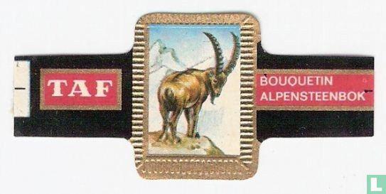 Taf - Alpensteenbok