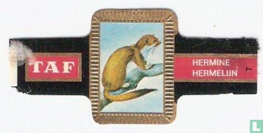 Taf - Hermelijn