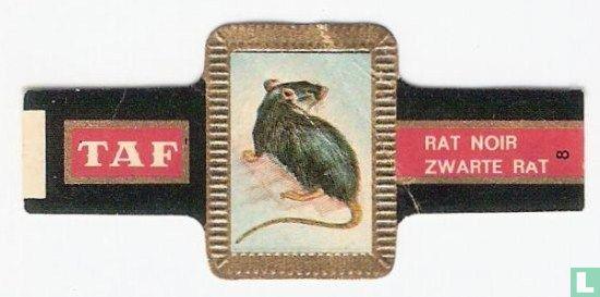 Taf - Zwarte rat