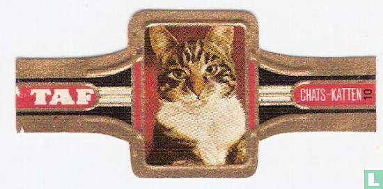 Taf - Katten 10
