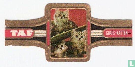 Taf - Katten 11